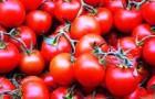 Помидоры, томаты (2) (Видео)