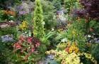 Посадка растений в бордюрах