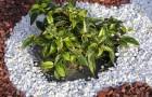 Посадка растений в гравии