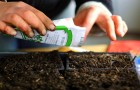 Посев семян для рассады