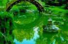 Пространство и ритм японского сада