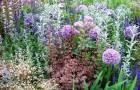 Пряно-ароматические растения (Видео)