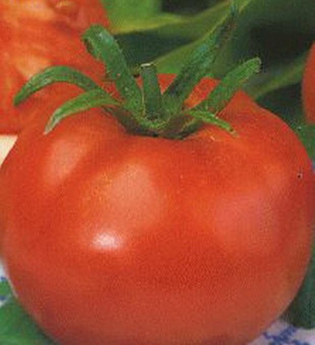 Сорт томата: Радостный