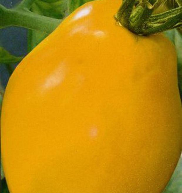 Сорт томата: Радуница