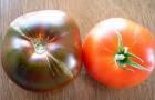 Сорт томата: Радужная вдова