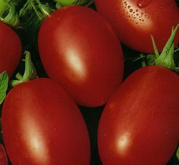 Сорт томата: Ракета