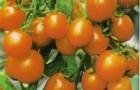 Сорт томата: Ранеточка