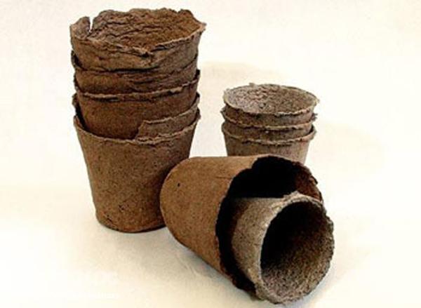 Рассадные горшочки из бумаги для выращивания лиан