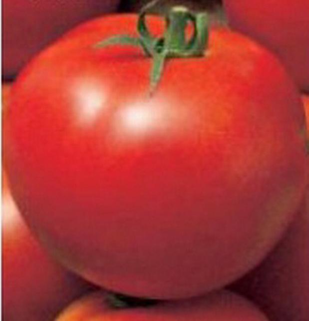 Сорт томата: Рассвет   f1