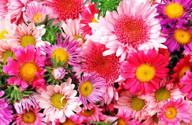 Растения которые принесут вашему зодиаку удачу