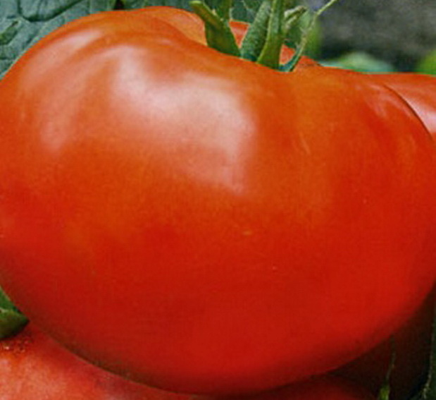 Сорт томата: Райское наслаждение