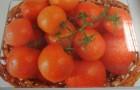 Сорт томата: Раздолье f1