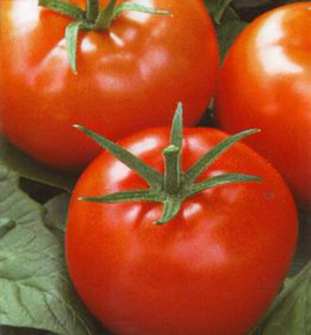 Сорт томата: Разносол