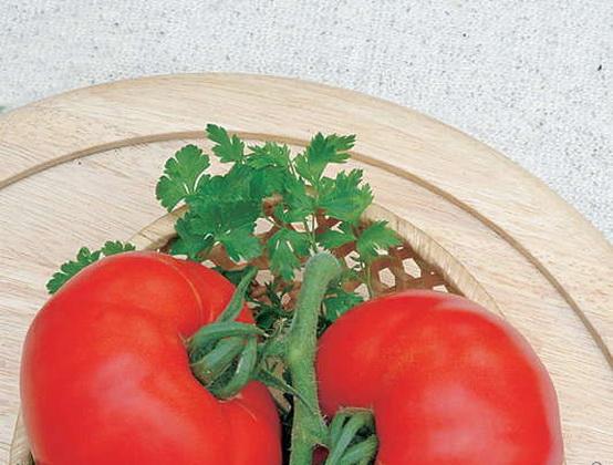 Сорт томата: Ред манул   f1