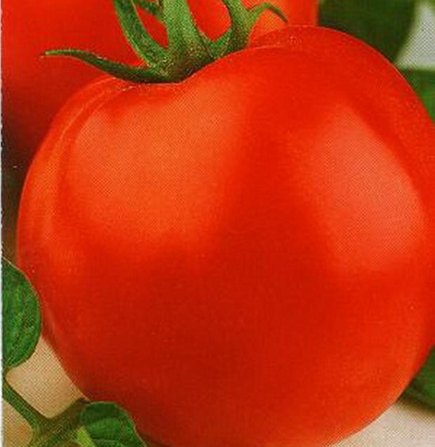 Сорт томата: Ректор