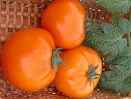 Сорт томата: Риф