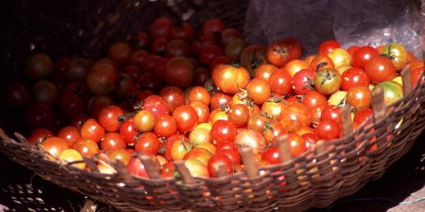 Ilha tomates