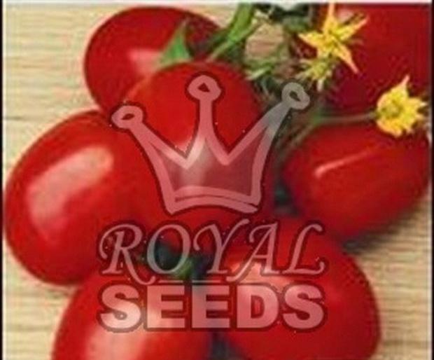 Сорт томата: Ровер   f1
