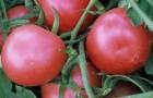 Сорт томата: Розалетта f11