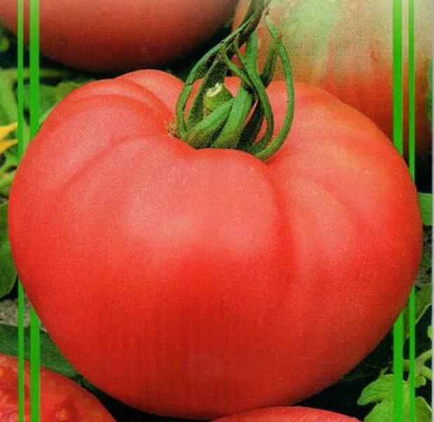 Сорт томата: Розе   f1