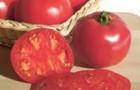 Сорт томата: Розовая красавица