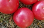 Сорт томата: Розовая стела