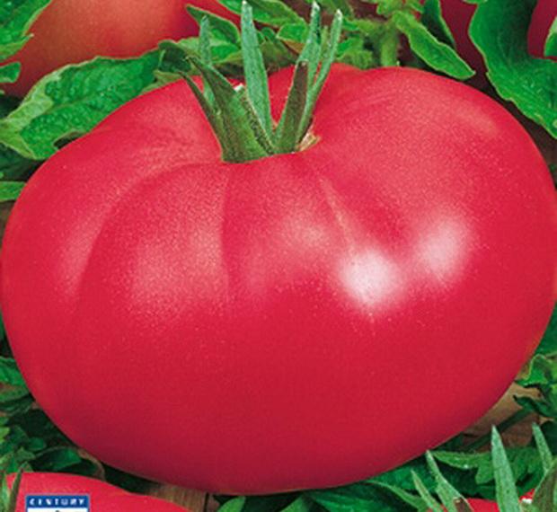 Сорт томата: Розовое сердце