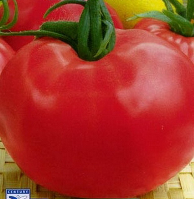 Сорт томата: Розовые щечки