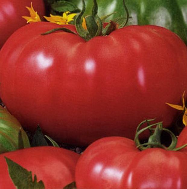 Сорт томата: Розовый слон