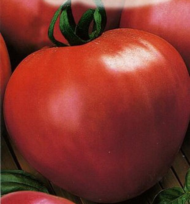 Сорт томата: Розовый спам   f1