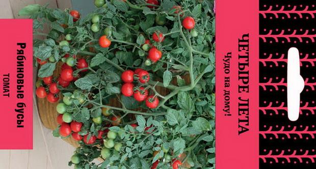 Сорт томата: Рябиновые бусы