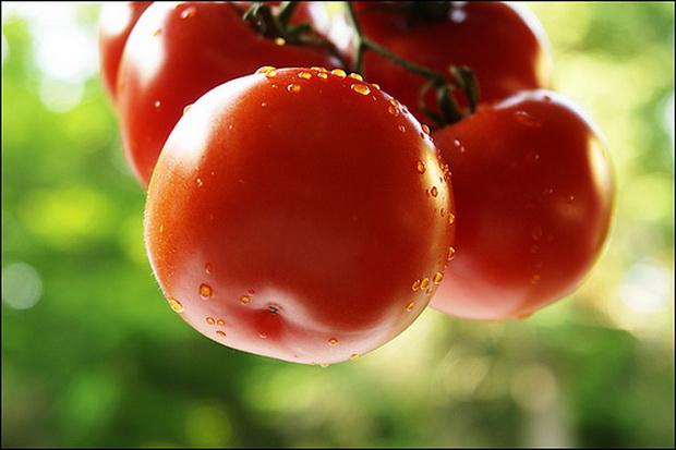 Сорт томата: Рюген