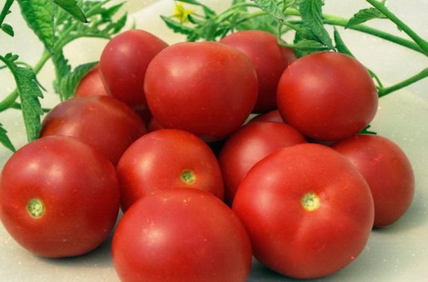 Сорт томата: Щедрость