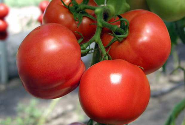 Сорт томата: Шакира   f1
