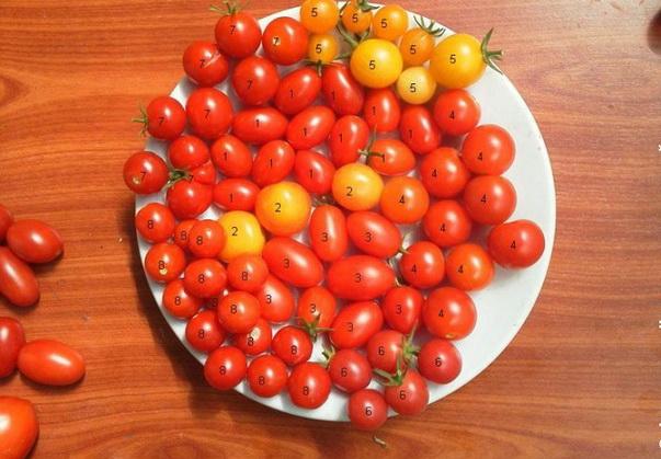 Сорт томата: Шалун