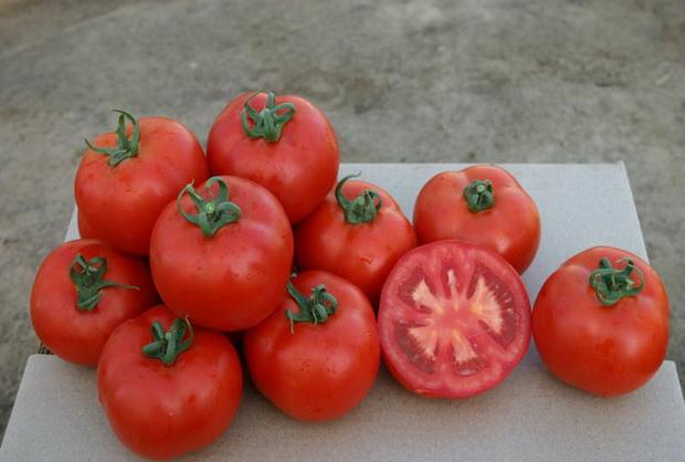 Сорт томата: Шарлотта   f1