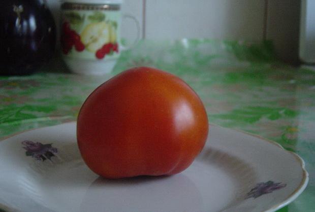 Сорт томата: Шеди леди   f1