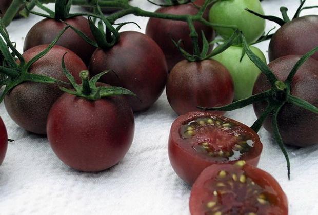 Сорт томата: Шоколадный