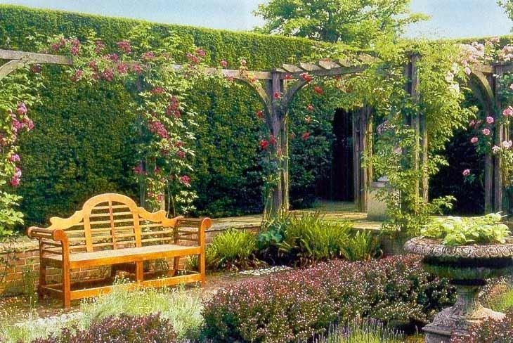 Шпалерные изгороди: Гаагская шпалера