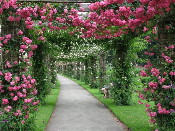 Шпалерные изгороди: арка