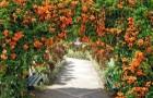 Садовые сооружения для выращивания лиан: цветочные шары