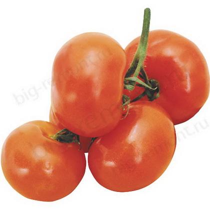 Сорт томата: Сахарный великан