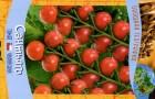 Сорт томата: Сантьяго
