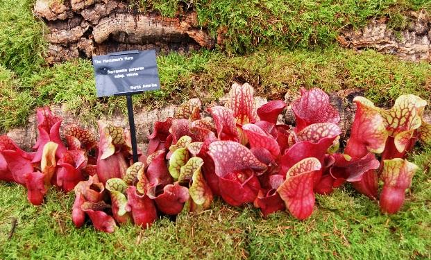 Взгляд изнутри на плотоядные растения