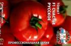 Сорт томата: Счастье русское f1