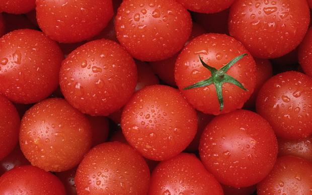 Сорт томата: Сэра   f1