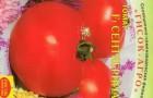 Сорт томата: Сентябрина f1