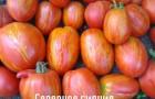 Сорт томата: Северное сияние