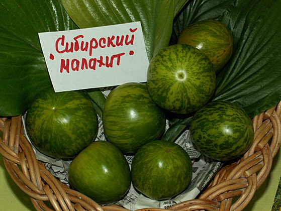 Сорт томата: Сибирский малахит