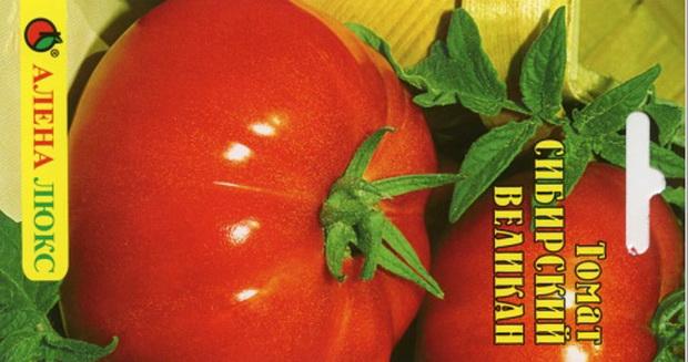Сорт томата: Сибирский великан